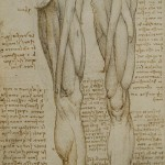 Drawing on anatomy by Leonardo da Vinci