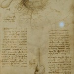 Anatomy drawing by Leonardo da Vinci