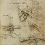 A page showing Leonardo's study on anatomy