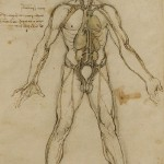 Human study on anatomy by Leonardo da Vinci