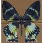 Black and white butterfly. The fragility of life - drawings upon old book covers by English artist Rose Sanderson