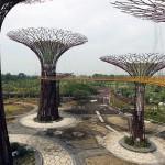 Singapore artificial woodland