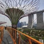 Woodland in Singapore