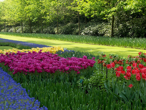 Keukenhof the world's largest flower garden