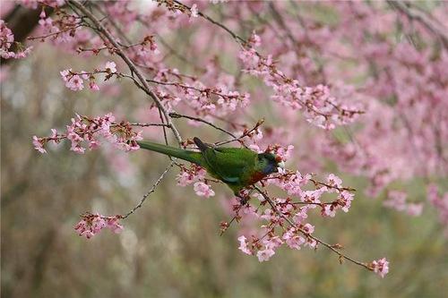 Maple Glen garden beautiful birds