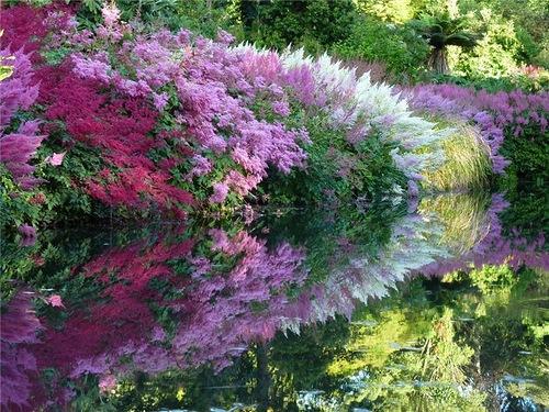 Maple Glen gardens in New Zealand