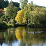 Green Maple Glen gardens