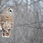 Owls are one of the only birds who can see the color blue
