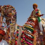 Pakistan Camel beauty
