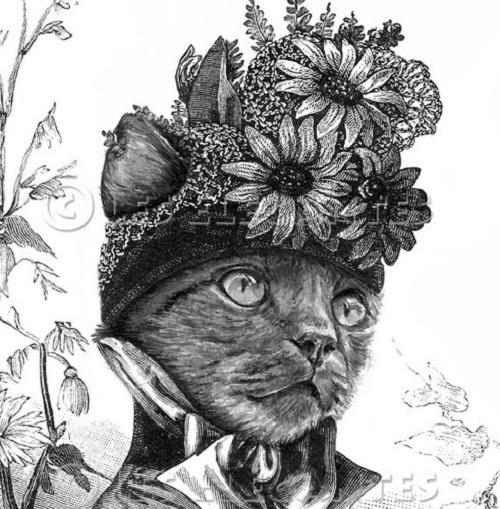 LesElegantes portraits of animals