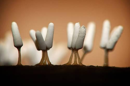 Alien landscape of slime molds