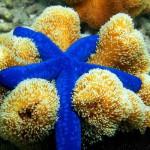 Starfish ocean wonder