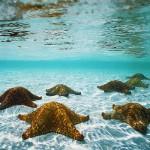 Natural wonder - starfish