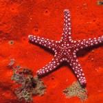 Bright scenery with starfish