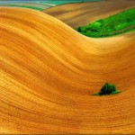 Yellow waves of the fields