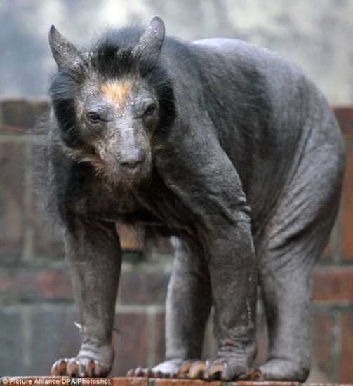 Guess what kind of animal. The bold bear
