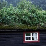 Covered with plants and Grass roof of a house. Norway