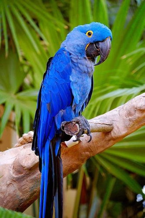 Beauty will save Facts about parrots - Beauty will save