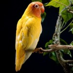 Interesting facts about Parrots