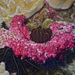 Stunning underwater garden of colorful plants and flowers