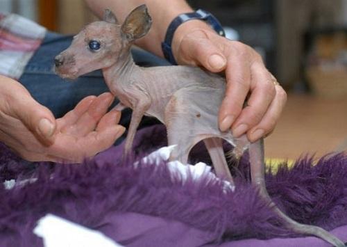 baby kangaroo Sabrina