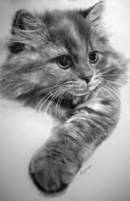 Incredible pencil drawings by Paul Lung