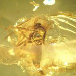 Insects trapped in amber