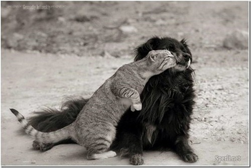 Friendship Benefits