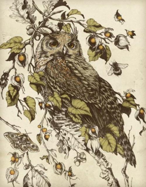 Owl by artist Teagan White