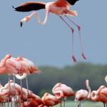 Amazing shot of Caribbean flamingos by German photographer Klaus Nigge