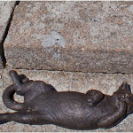 Step cat in Devonshire, United Kingdom