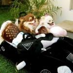 Dogs' dolce vita