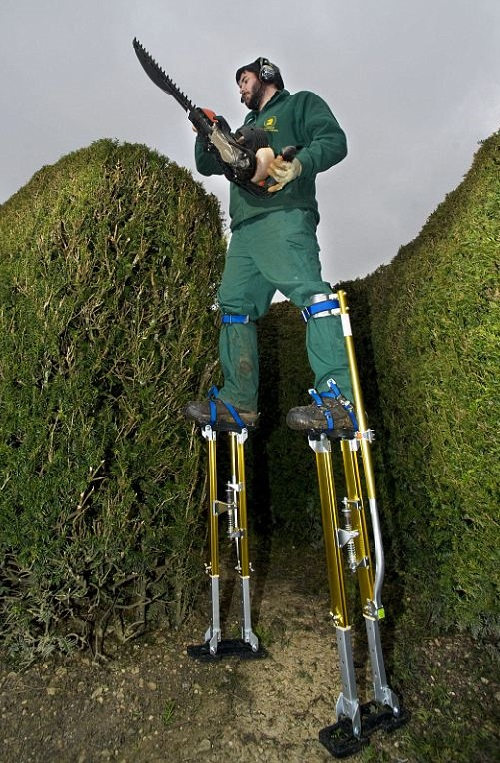 Gardeners use stilts to cut maze at Longleat house in Wiltshire
