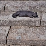 Sculpture of cats on the steps in the UK