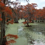 Wetland of International Importance - Caddo Lake, Texas and Louisiana