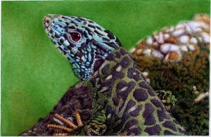 A water lizard. Photo realistic drawing by Portuguese artist Samuel Silva