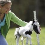 Einstein, the smallest horse in the world