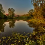 Small pond near the forest. Beautiful nature by Aleksandr Danilin