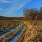 The village road. Beautiful nature by Aleksandr Danilin