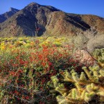 Desert plants, landscapes by nature photographer Kevin McNeal