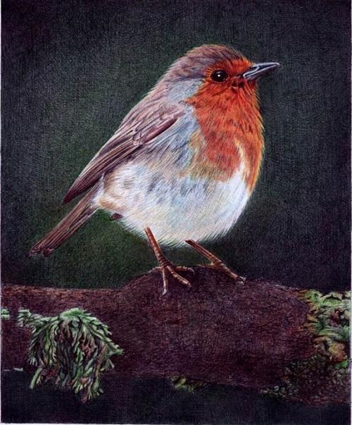 A little bird. Drawing by Portuguese artist Samuel Silva
