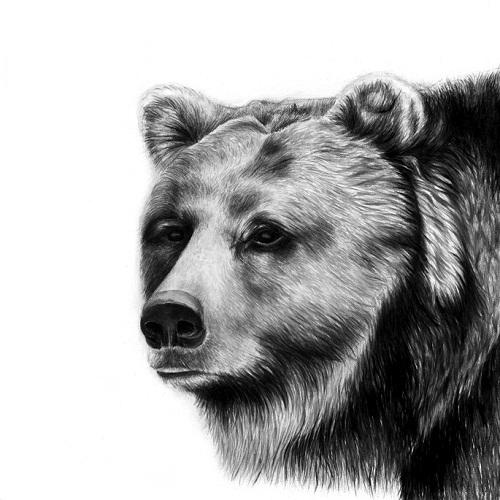 Pencil drawings by Jaimee Paul