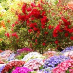 Riot of colors – Flower Garden in Canada