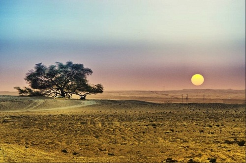The Tree of Life – one of the worlds loneliest trees