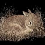 A little rabbit. Scratchboard painting by American artist Dan Berg