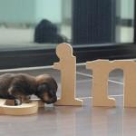 Walking by letters, puppy Mini