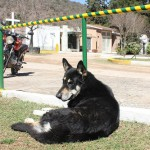 Faithful Argentinian dog Captain, who never leaves his owner's tomb