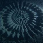 The deep sea mysterious circles