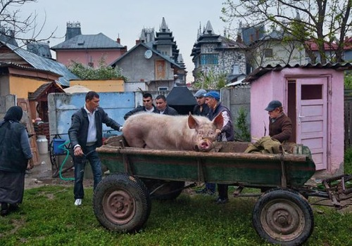 Romanian gypsies living luxury life