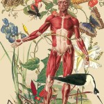 Flowers and birds in anatomical drawing by Argentinian born artist Juan Gatti